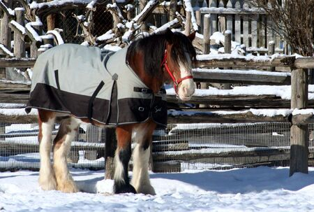 A clydsdale horse wearing a coat photo