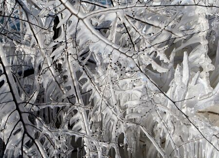 Branches encased in ice