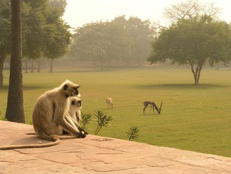 Exotic animals at an India Mausoleum outside Agra where the much more famous Mausoleum resides, the Taj Mahal. Stock Photo