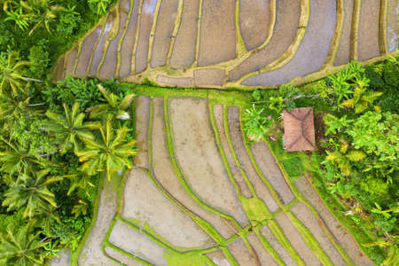 View from above, stunning aerial view of the Jatiluwih rice terrace fields during sunrise. Jatiluwih rice fields are a series of rice paddies located in Tabanan Regency, north Bali, Indonesia.