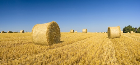 Golden hay bales on a clear summers day. photo