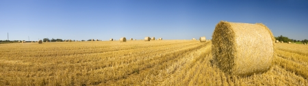 bale: Golden hay bales on a clear summers day.