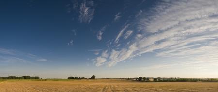 corn fields: Big skies over rural golden corn field.