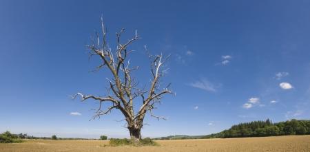 needing: Lone tree needing water in rural setting.