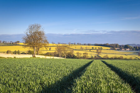 fossil fuels: Gently rolling hills, ploughed field and traditional drystone wall leading to vibrant yellow crop of canola grown as a healthy cooking oil or conversion to biodiesel as an alternative to fossil fuels