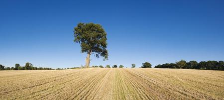 needing: Lone tree needing water in rural setting