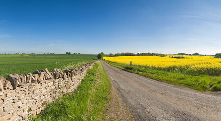 fossil fuels: Vibrant yellow crop of canola grown as a healthy cooking oil or conversion to biodiesel as an alternative to fossil fuels  These crops are becoming ever more popular as fossil fuel production nears its peak