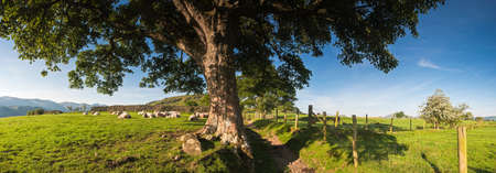 english oak: Rural scenic landscape, Lake District, UK