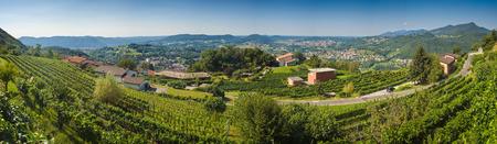 Vigneti nel Lake District italiana, Italia. Archivio Fotografico