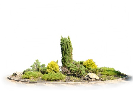 massif de fleurs: La fleur verte-lit