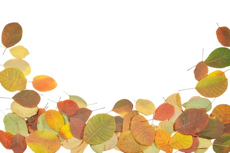 The autumnal leaves against white background Stock Photo - 11724441