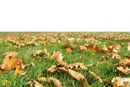 grass plot: The green grass plot with yellow autumnal leaves