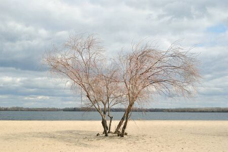 Lonely tree on the sand riverside photo