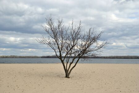 riverside tree: Lonely tree on the sand riverside Stock Photo