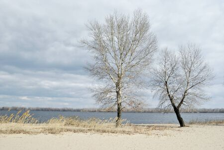 riverside trees: Two trees on the sand riverside Stock Photo