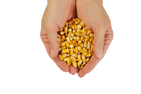 yield: The yield of maize