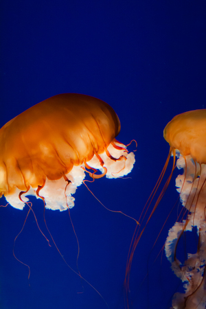 jelly fish close up photo