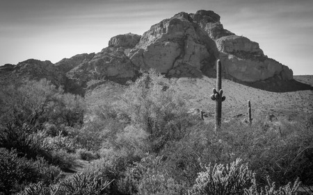 desert landscape in phoenix arizona black and white photo