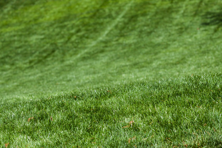 love: Lawn texture ove a rolling hill Stock Photo