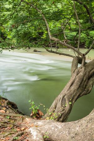 indian creek: Creekside nature in rural Georgia