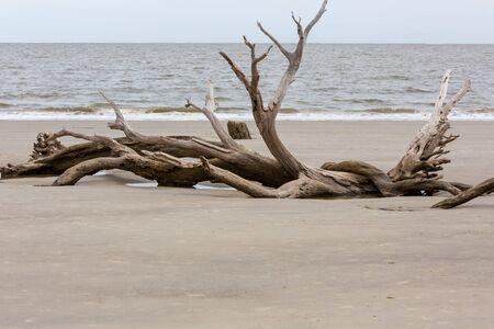 Driftwood and weathered trees on Jekyll Island Georgia coast Stock Photo