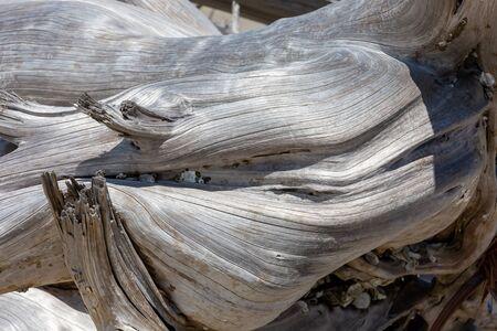 Driftwood and weathered trees on Jekyll Island Georgia coast