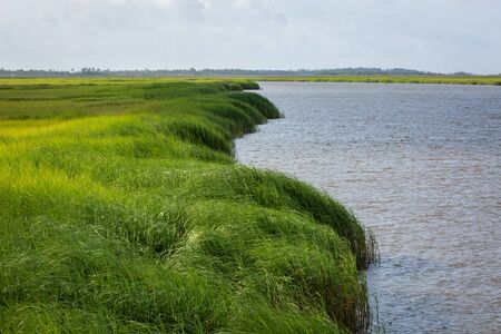 Brackish water grass marsh coastal Georgia 스톡 콘텐츠