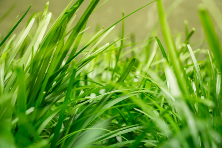 reminding: Tranquil fresh grass under a warm morning sunlight, reminding us to conserve and protect mother nature, make responsible decisions and be aware of environmental issues. Copyspace room on bottom.