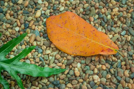shrubbery: A single orange leaf sits peacefully in contrast next to the thick green shrubbery while the uniquely colored stem reaches out to pull back the child of the tree that it once nurtured.