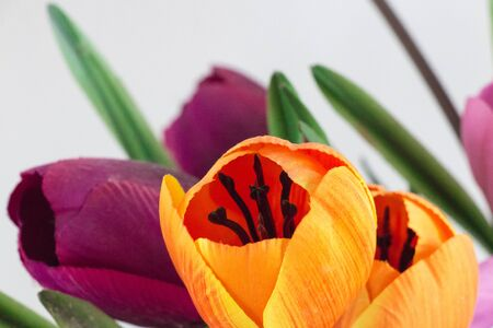 Cheerful and peaceful artificial flowers of various colors in orange and purple colors with feminine energy and symbolizing estrogen.