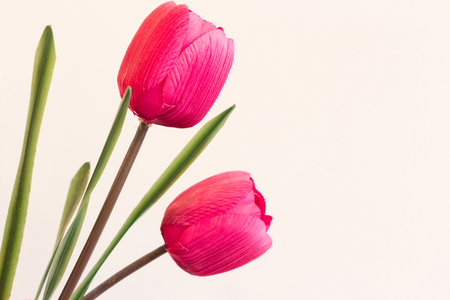 identical: Plastic tulips in pink with large copyspace.  This cloned flower symbolizes genetic manipulation to make two identical forms of life.  Synthetic flowers. Stock Photo