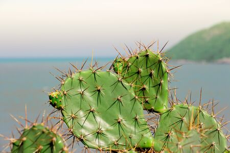 Sharp catcus prongs with ocean in the distance. Stock Photo