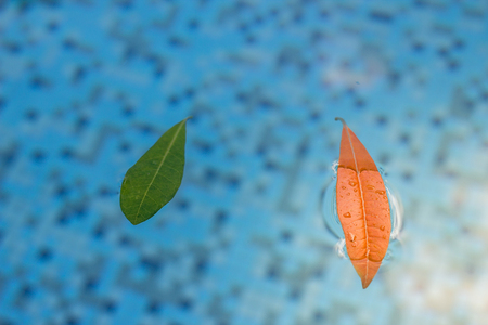 Soft light on a peaceful pool reflection showing two leaves floating in a fresh tranquil pool.  A serene shot with defocused area perfect for copyspace. Stock Photo
