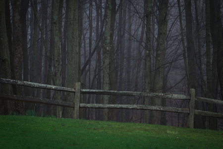fenceline: Scary woods with fenceline and dreadful horrific things that lurk in the darkness.  Drizzly rain and morning twilight.  Copy space. Stock Photo