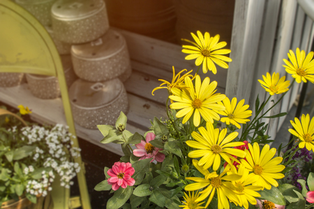 Spring flowers potted near garden accessories and planting season with antiques and wonderful smells with warm sun.