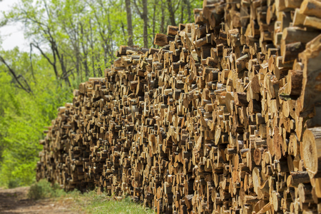 Log pile for deforestation concept.  Sadness and death of animals and trees for paper and wood products.  Cutting down of acres of forest. Stock Photo