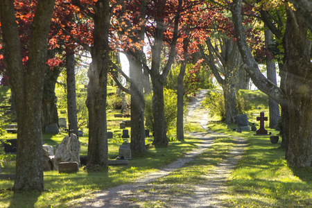 Graveyard god light shining through trees in cemetary and dirt road to nowhere. Stock Photo