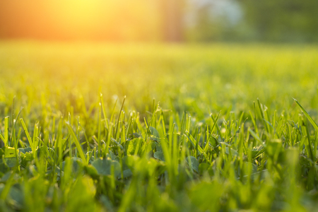 Tranquil fresh grass on lawn for orange sunset and life force emotional with copyspace for text and words.