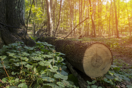 Tree cutting clearcut forest and dead tree stumps destruction and not protected forest. Stock fotó