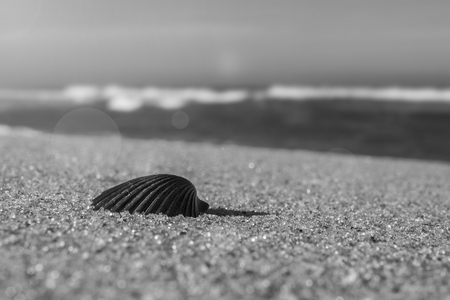 Shell on beach sand jersey shore tropical island travel and vacation concept.  Warm sun and ncie beaches at oceanside with copyspace for text.
