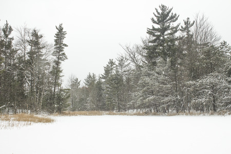 Midwestern winter landscape in January or February with frost and natural beauty outdoors. Stock Photo