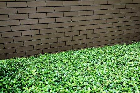 Template background of urban decay wall with trimmed green hedge. 版權商用圖片