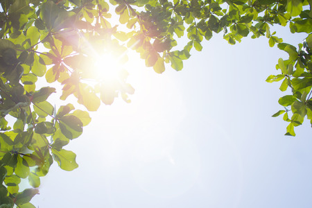 Use sunscreen and avoid the dangers of daytime sunlight on your skin.  Dangerous sunlight beams through flora.