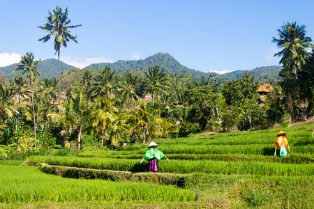 Jungle trekking in Asia and tropical vacation destinations. Stock Photo