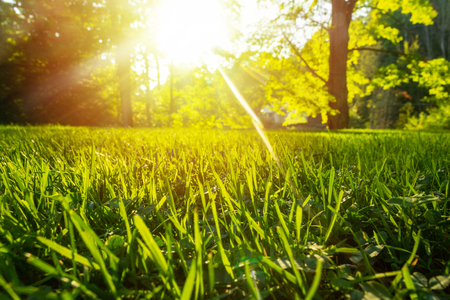 Hierba fresca y tranquila para el crecimiento y el concepto de agua de la madre naturaleza. Copie el espacio para el texto.