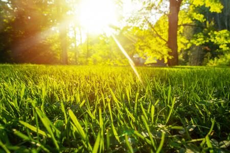 Ruhiges frisches Gras für Wachstum und Wasserkonzept Mutter Natur. Kopieren Sie Platz für Text.