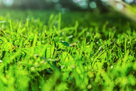 Fresh green grass in park for outdoor travel and hiking concept.  Protecting Earth and natural environments.