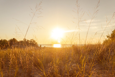 Sunlight through tall grass for epic dreamlike natural ecosystem concept.  Sunny bright peace and balance. Stock Photo