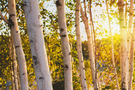 Spa therapy background image of nature and trees in the fresh air for balance and harmony.