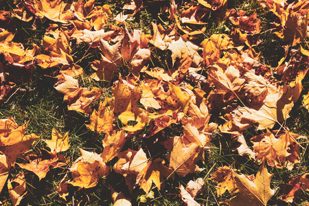Fall color tour.